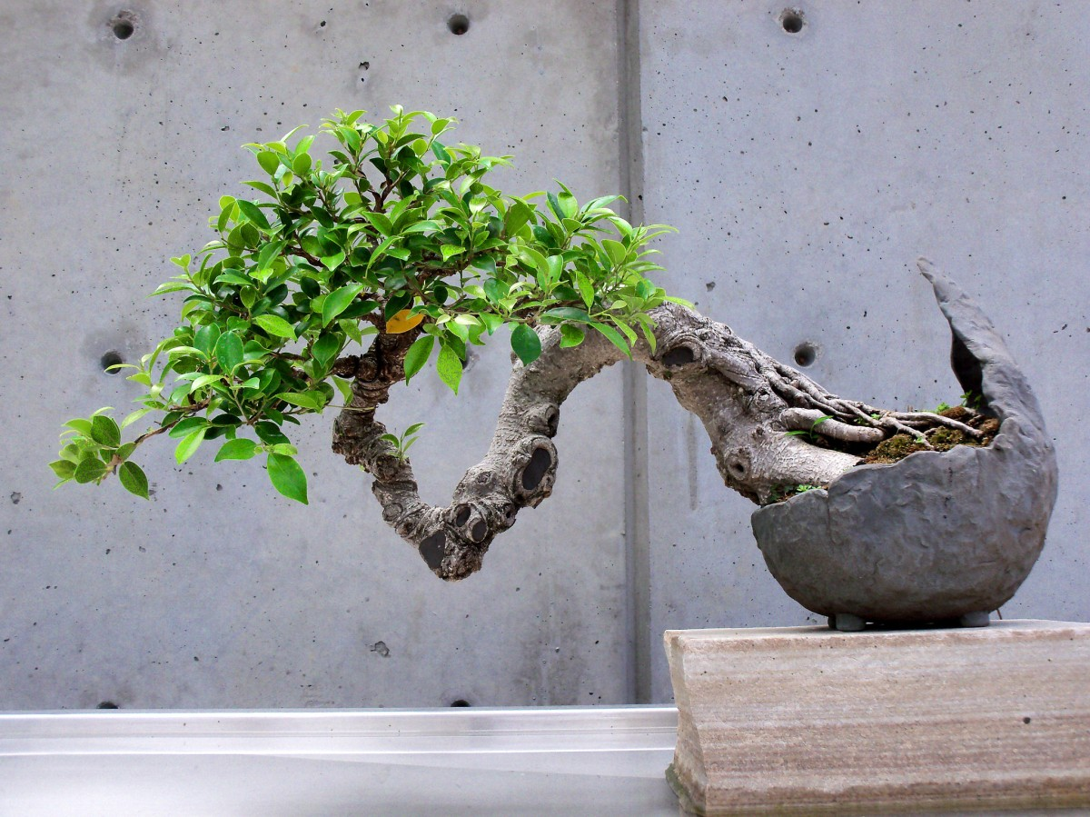 Holding the Bonsai